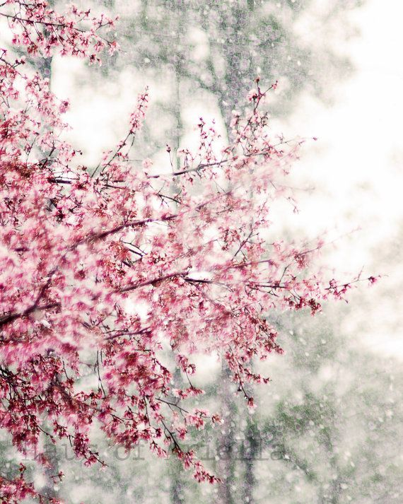 Cherry Blossom Print Snow Pink Flower