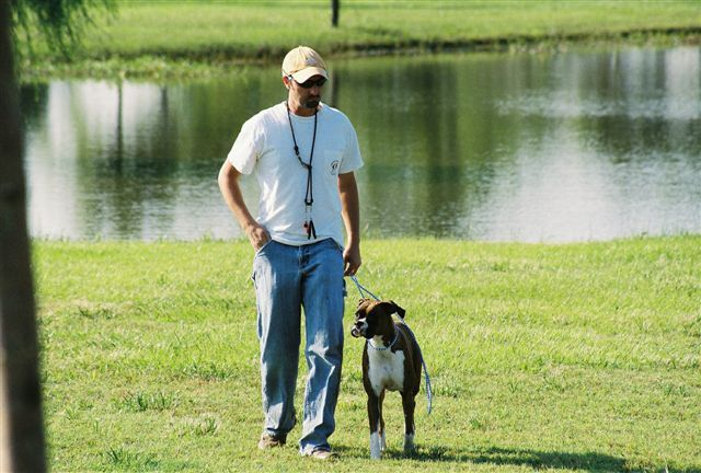 Dog Training For Service Dogs Requires Much Dedication