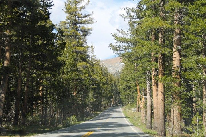 Paved road through trees in sunshine free stock photos