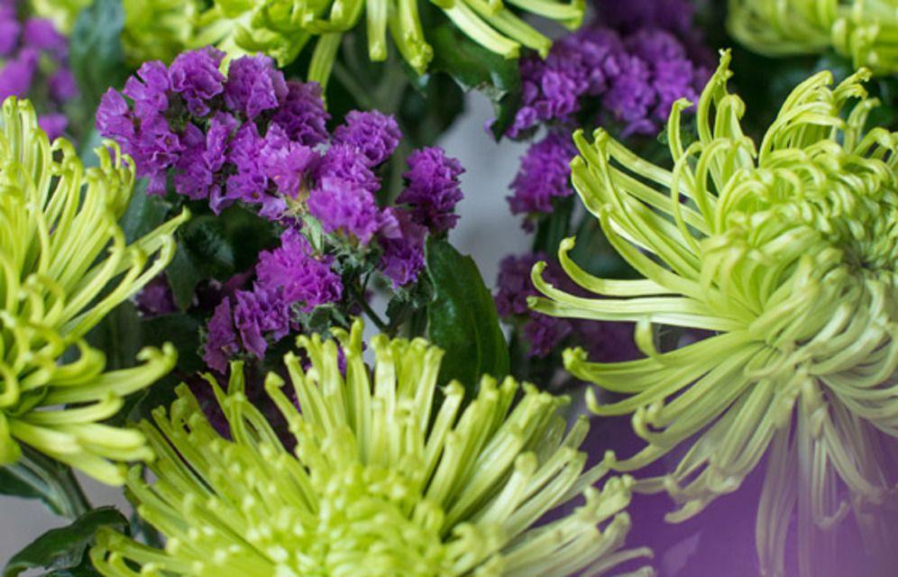 KW 24 langstielig: FREAK OUT 8 grüne Chrysanthemen und 5 Stiele Statice für ihre Bodenvase