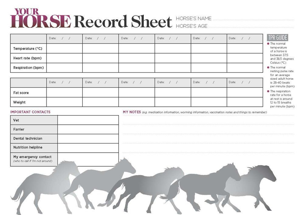 Download A Free Horse Record Sheet Horse Age Free Horses Horse