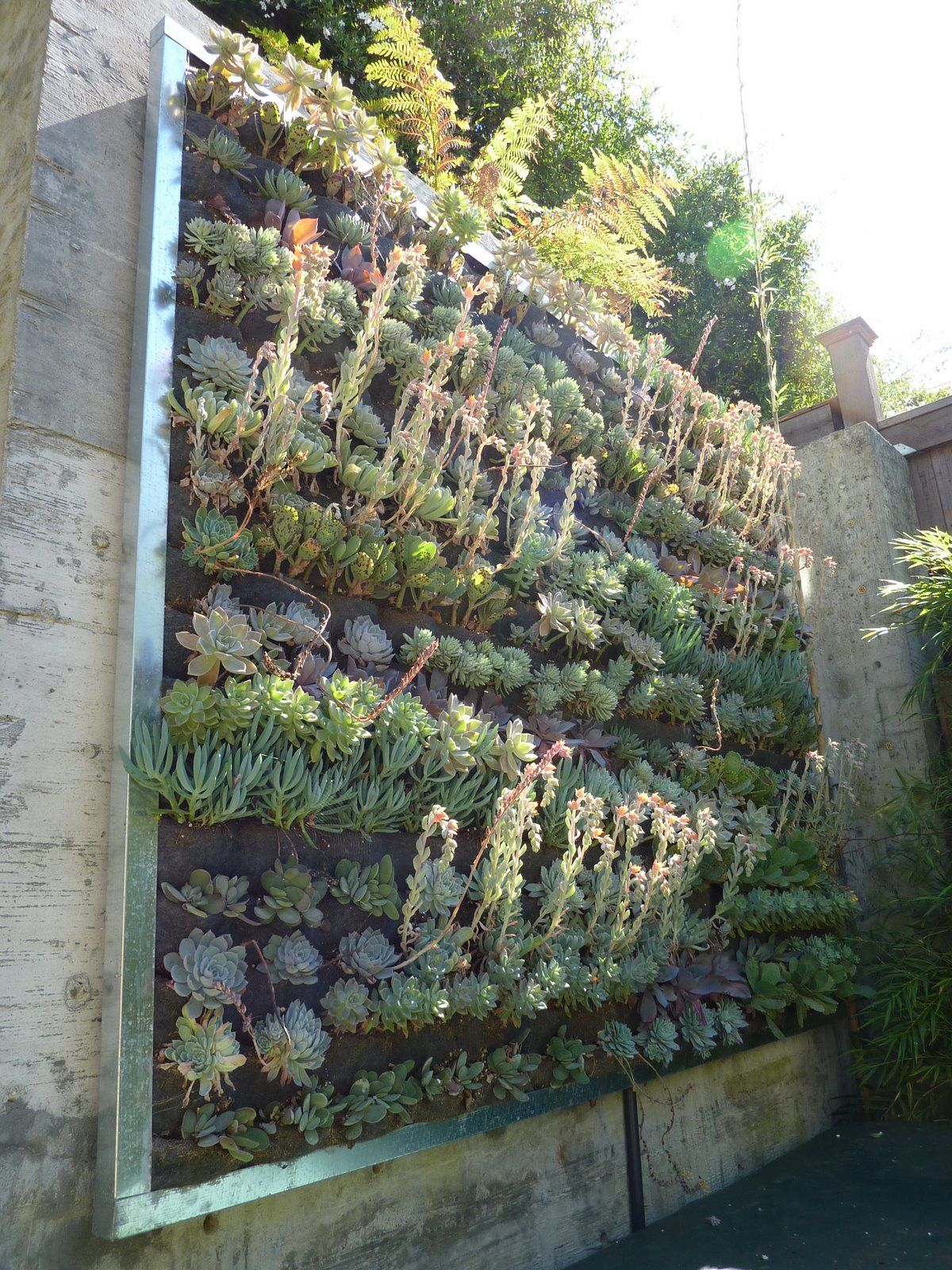 Image Result For Succulent Walls