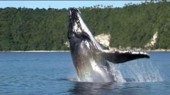 Pacific Life Tv Commercial For Years Go By Whale Whale Life Tv