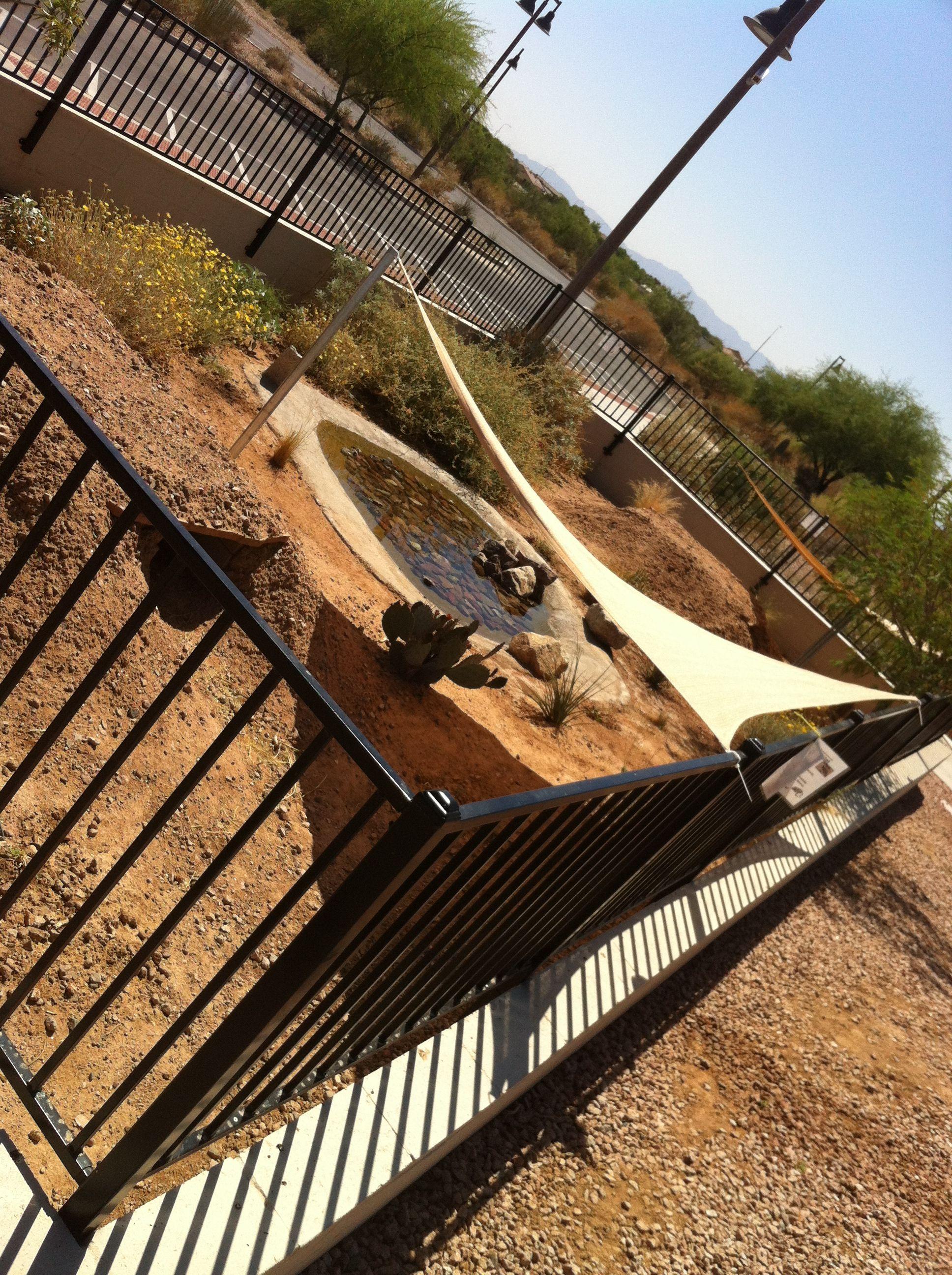Veteranus oasis park desert tortoise enclosure russian tortoises