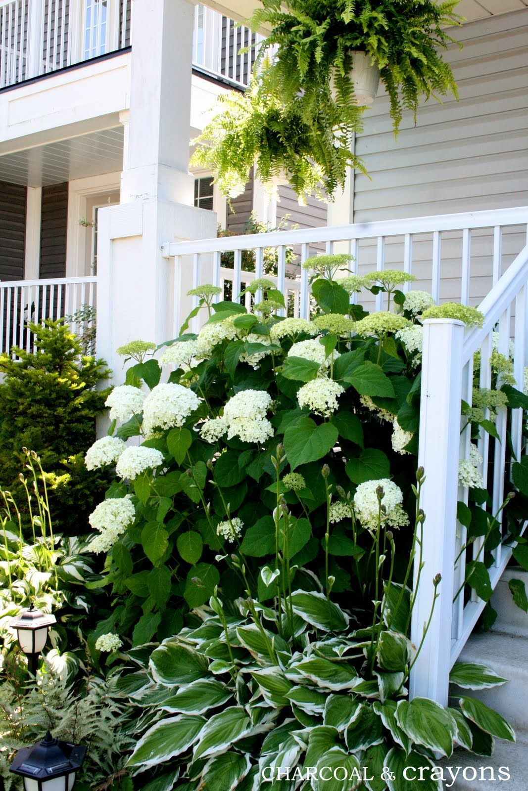 Hydrangeas And Hostas And Lily Of Valley On North Side And Cola Coral Bells Boxwoods Red Twig Dog Hydrangea Landscaping House Landscape White Gardens
