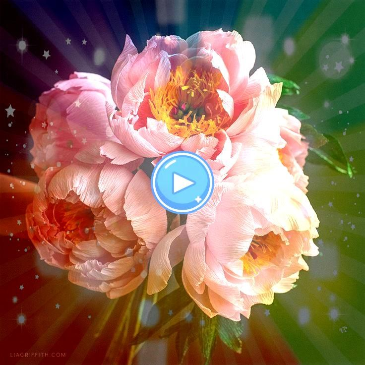 the February Crepe Paper Coral Supreme PeonyJoin the February Crepe Paper Coral Supreme Peony How to Make Giant Paper Flowers Get the full tutorial on these beautiful pap...