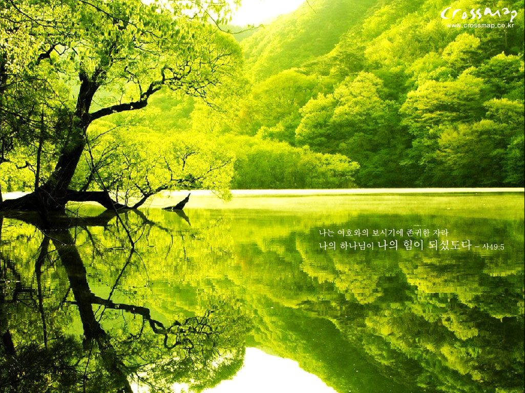 Green Lake Green Trees Green Colour Images Beautiful Scenery Wallpaper