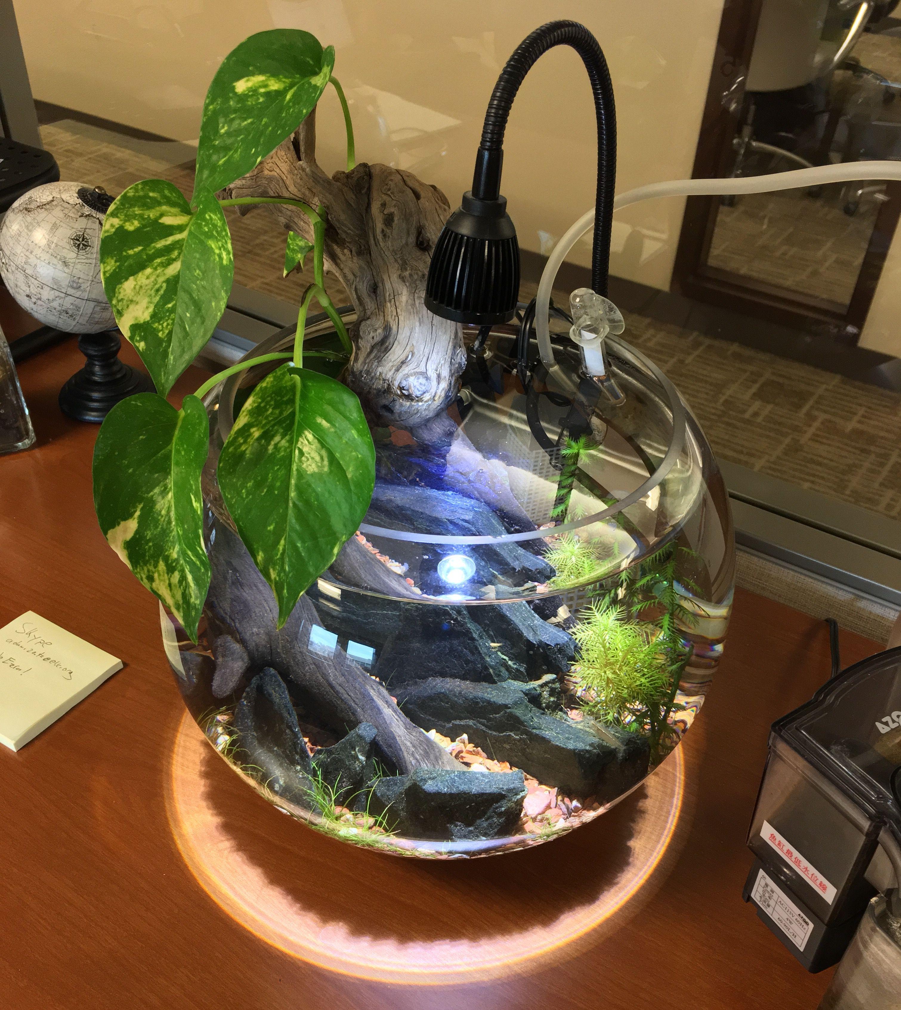 5e09b83bdd041113c0e36e126dd78d97 Luxe De Crevette Aquarium Des Idées