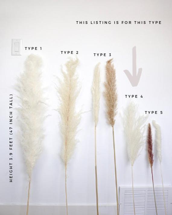 PAMPAS GRASS Type 4 (3 Stems)- Natural White Dried Pampas Plant Decor, Pampas Wedding Decor Bouquet, Boho Bohemian Wedding Flower
