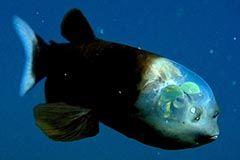 Los peces más raros