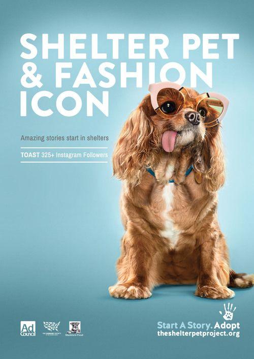 Spp Print Comps 0001 Toast Jpg Pet Advertising Dog Branding Pets