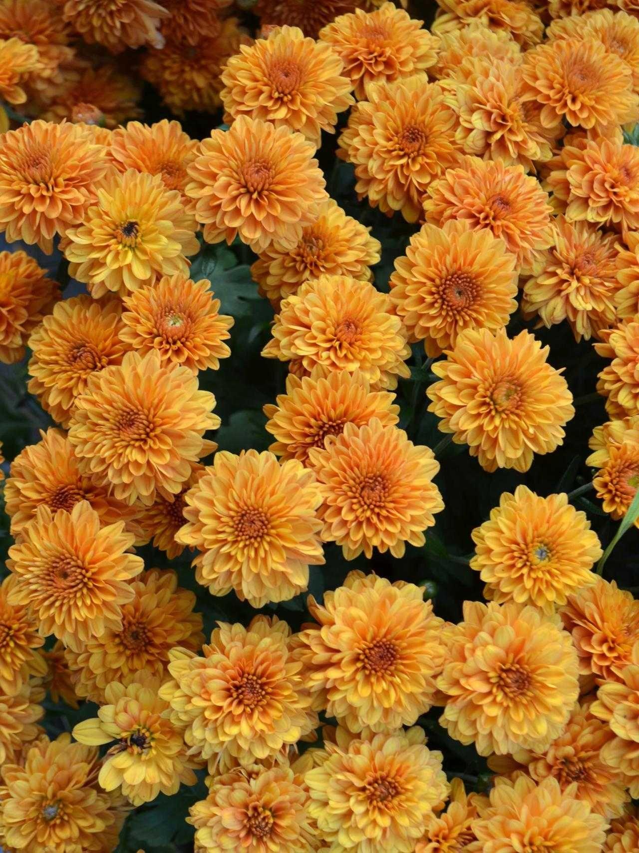 beautiful orange flowers garden summer plants ideas garden