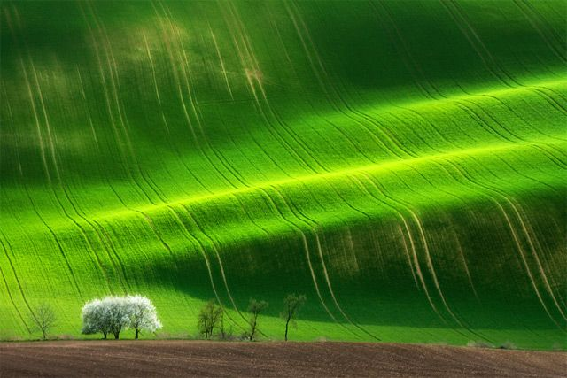 Idyllic Photographs Of The Tuscan And Moravian Landscapes By - The mesmerising beauty of moravian fields photographed by marcin sobas