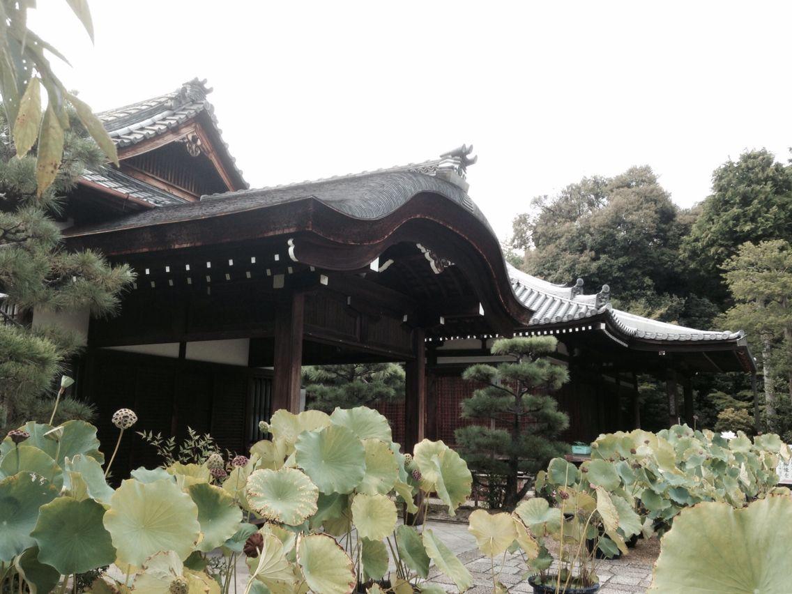 法金剛院 Ho-kongoin Temple 20140831-3