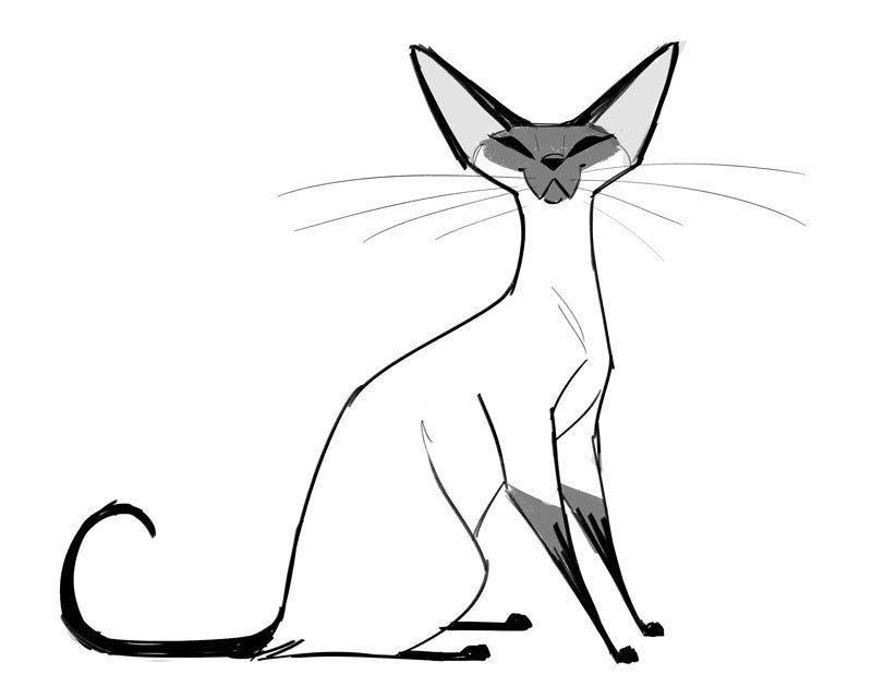Картинки кошки сиамские для срисовки