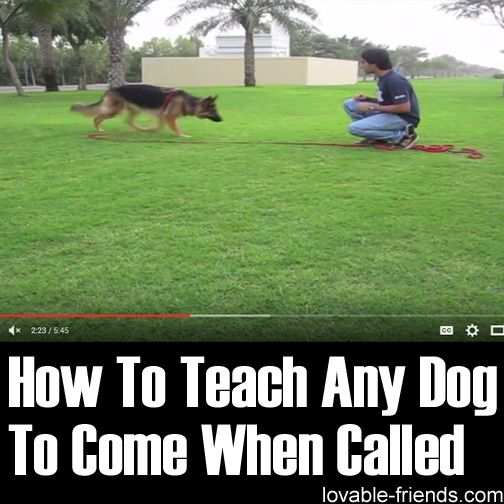 How To Teach Any Dog To Come When Called Dog Training Dog