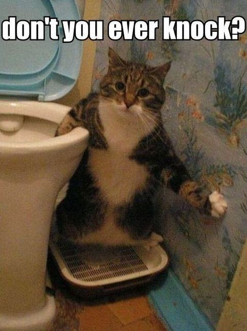 Small Bathroom Jokes don't you ever knock? surprise your cat going to the bathroom in