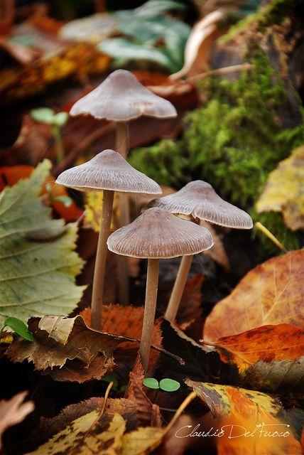 [Setas y hojas de otoño] » Mushrooms and autumn leaves