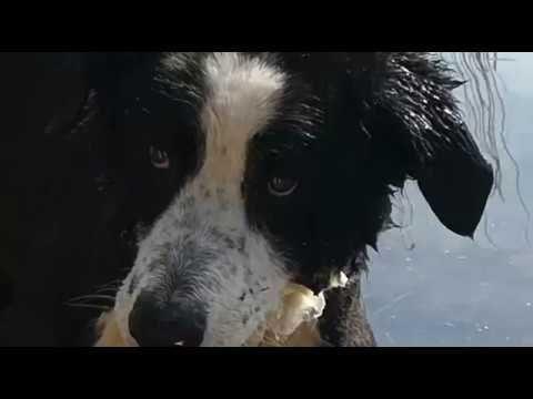 Die Vielfalt der Hunde - Der extrovertierte Wächter