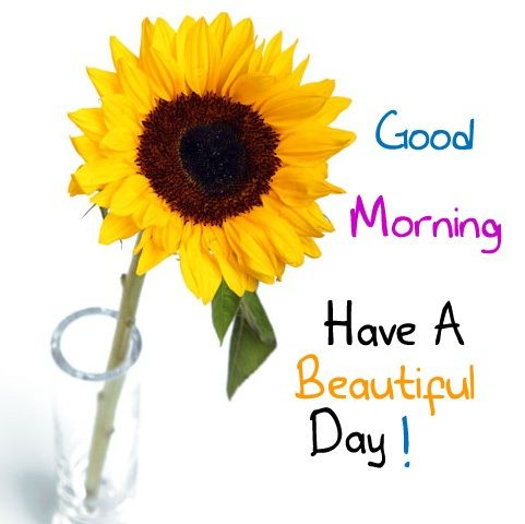 Good Morning Good Morning Have A Great Day Good Day Quotes Good Morning Beautiful Images Good Day Messages