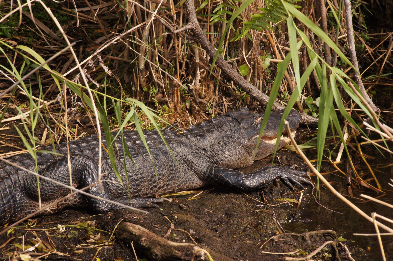 Looks Like He Just Heard A Good Joke Everglades National Park Different Birds National Parks