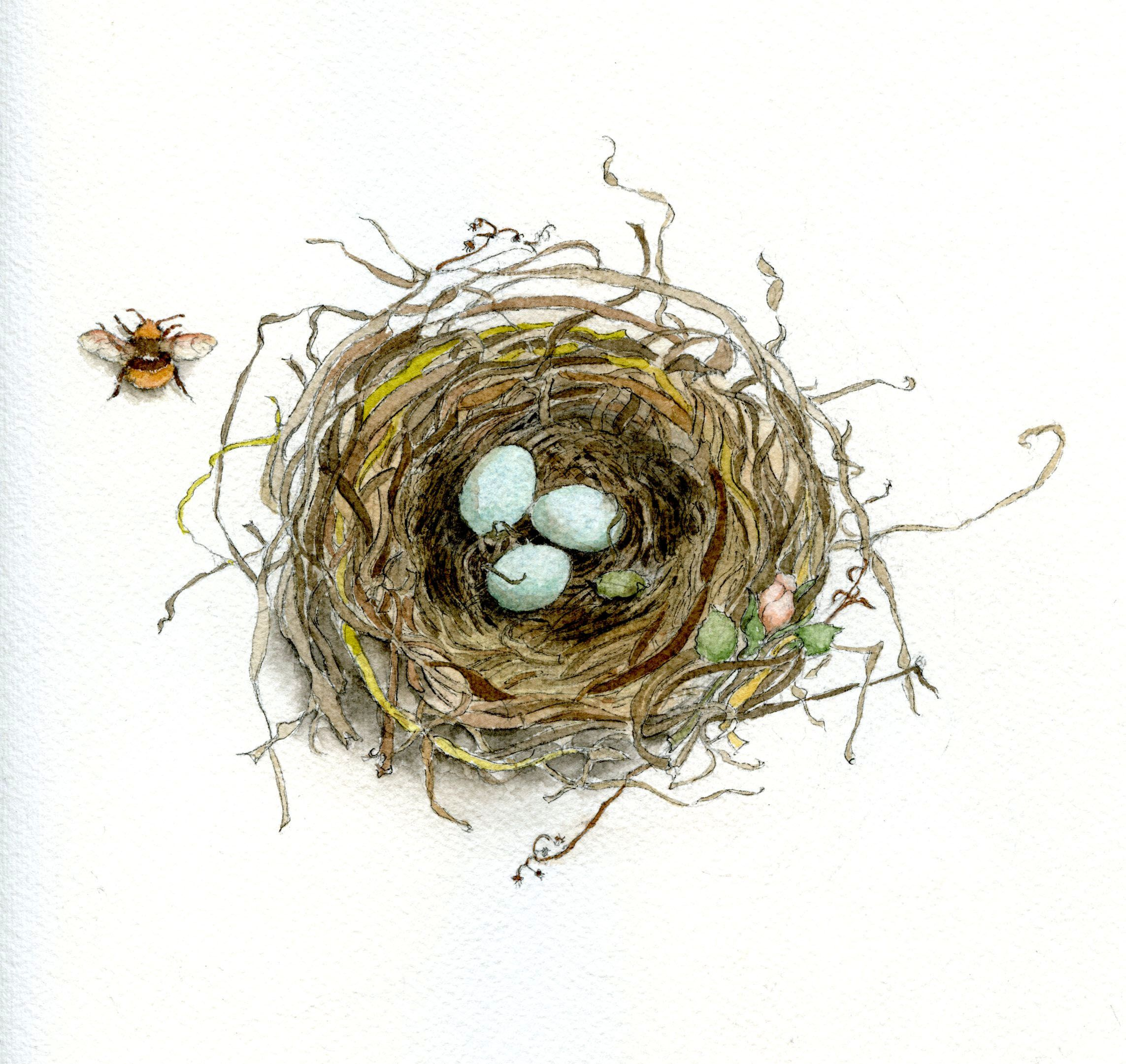 How To Draw A Bird S Nest And Add Color Watercolor Bird Bird