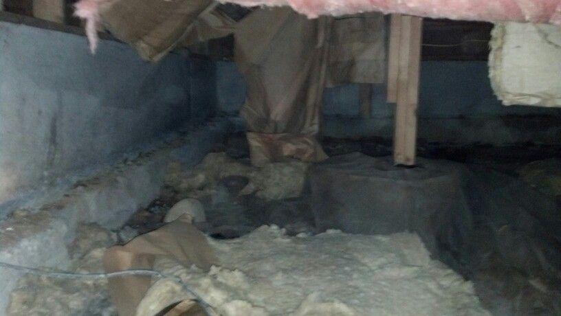 14++ Animal in attic removal cost ideas