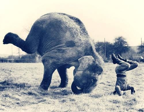 Yoga in the wild....Elephant yoga!!! #headstand