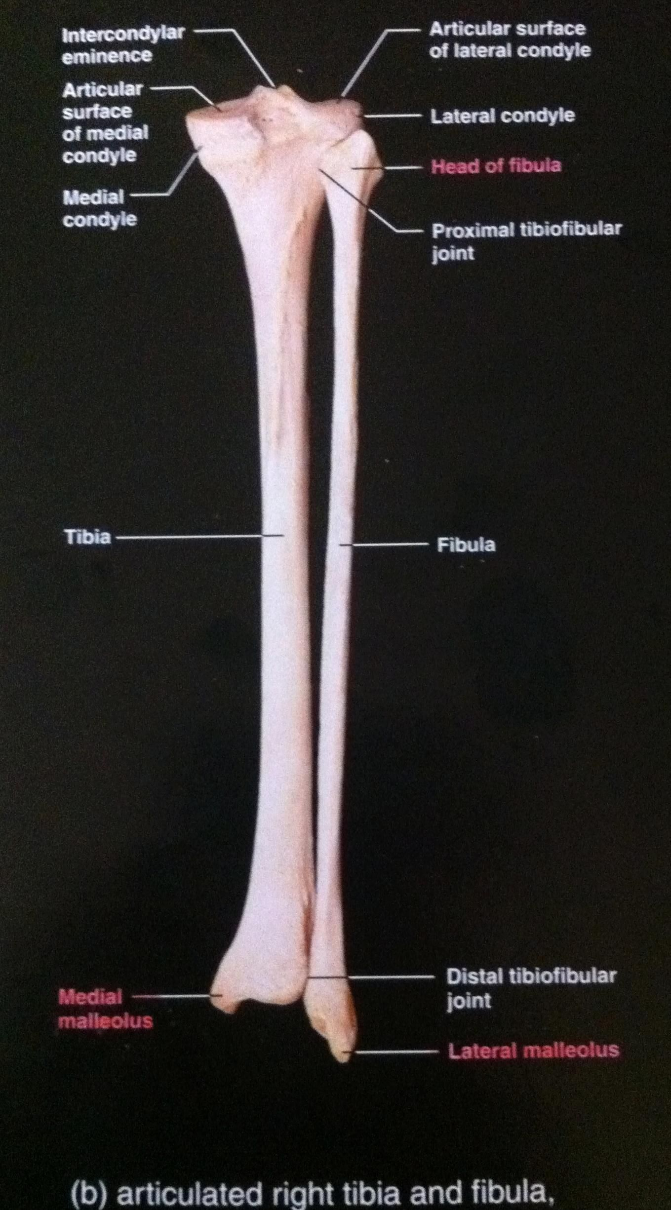 Image Result For Bones Of The Foot