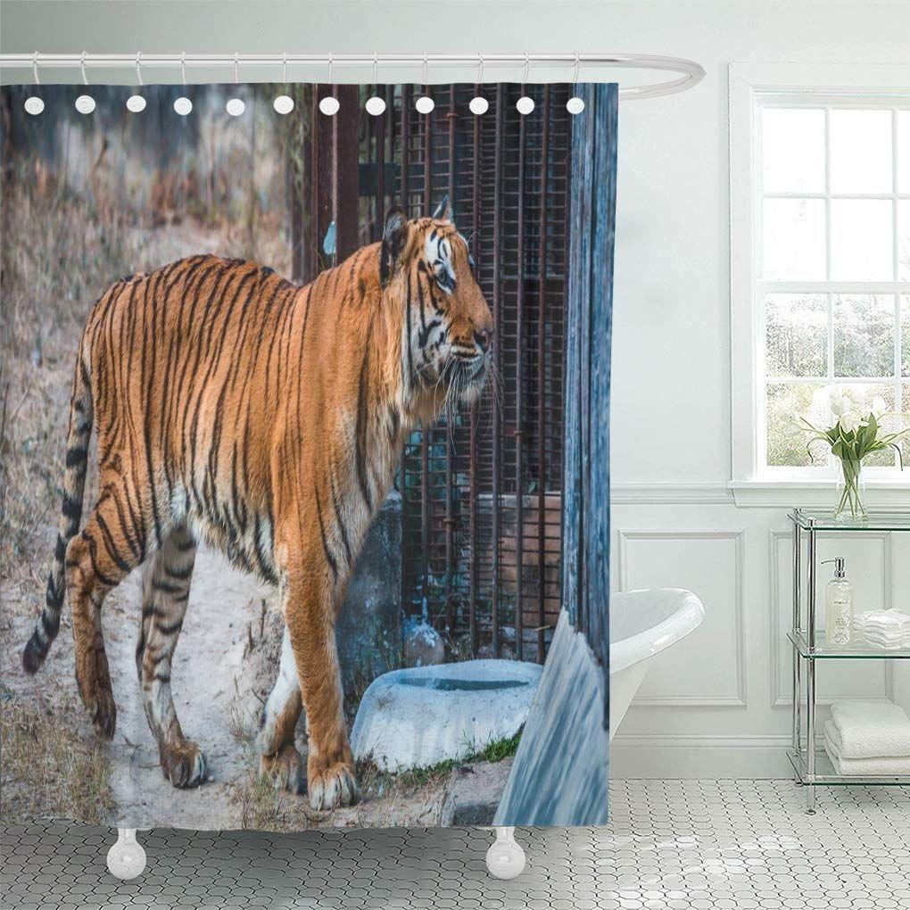 Royal Bengal Tiger National Zoological Park New Delhi Shower