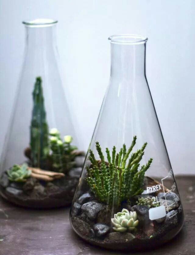 Laboratorium glas | just grow it | Pinterest