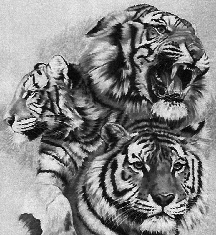 Фотография   Тигровый рисунок, Тигр, Картина с тигром