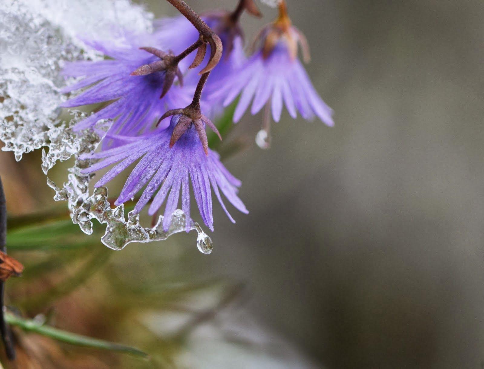 Rain flowers beautiful purple flower in rain hd wallpaper hd rain flowers beautiful purple flower in rain hd wallpaper hd wallpaper pictures altavistaventures Gallery