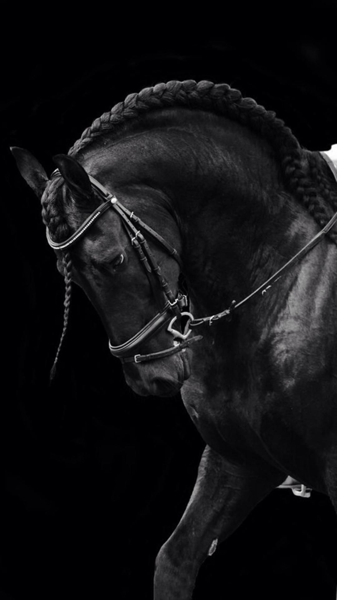 Black Quenalbertini Iphone Wallpaper Iphone 6 Retina Wallpaper Black Horses Friesian Horse Pretty Horses