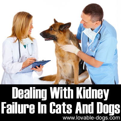 Dealing With Kidney Failure In Cats And Dogs in 2020