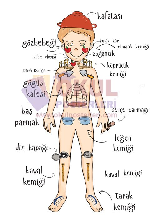 Vücudumuzu Tanıyalım Okul School Education Ve Turkish Lessons