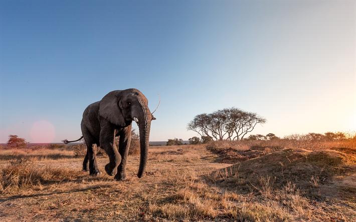 Desktop hintergrund elefant