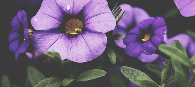 Image Result For Flowers Flowers Flower Meanings
