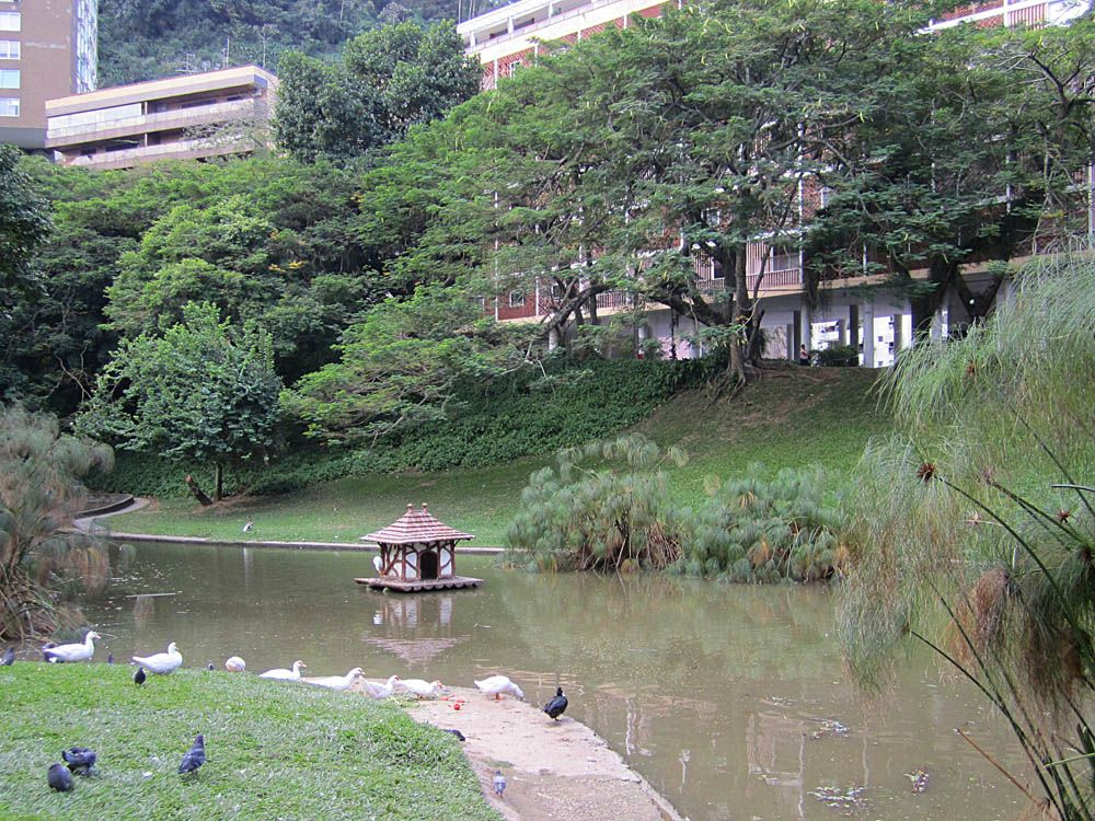 EDUARDO GUINLE 9- Parque Eduardo Guinle: O parque localizado no fim da Rua Gago Coutinho, em Laranjeiras, tem entrada por um belo portão que dá acesso a uma área de 24.750 m² onde se vê um pequeno lago, alamedas, gramados, árvores e plantas tropicais.  O local é ótimo para passeios em família e piqueniques.