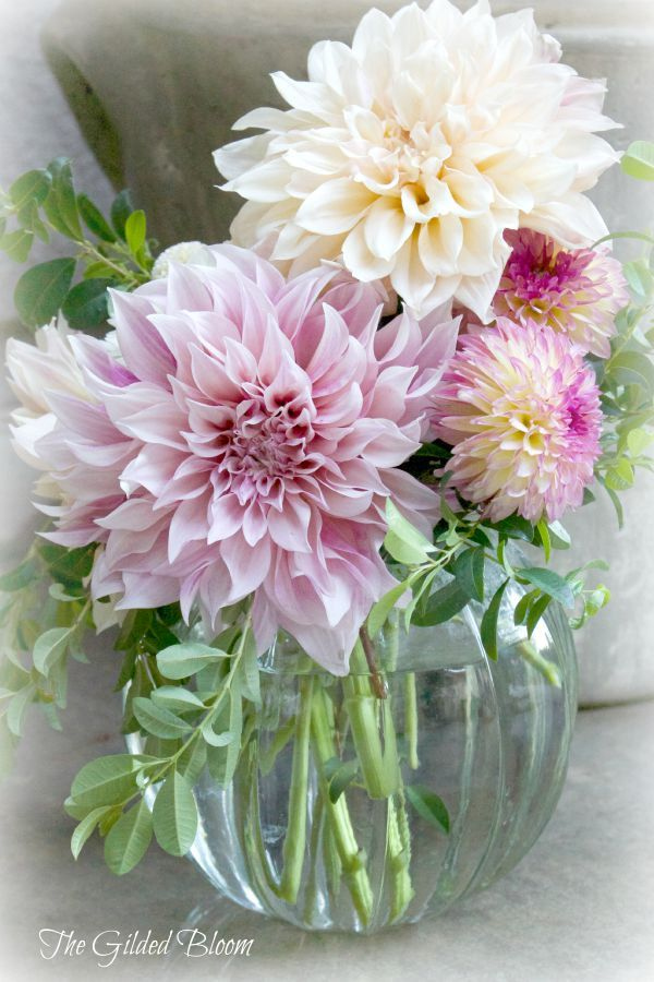 Flowers Photo Cafe Au Lait Dahlia Arrangement Floral Photography Dahlia Flower Arrangements Dahlia Flower Garden Flower Arrangements