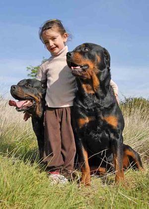 Big Female Dog Names Large Naming Ideas For Your Girl Female