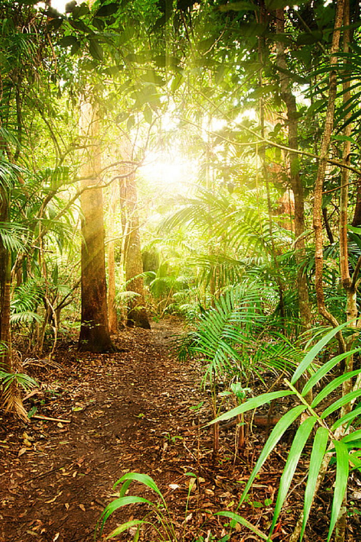 The Tropical Rainforests In Queensland Are Some Of Australia S Most Pristine Natural Environments Visitqld Nature Landscape Tropical Rainforest Rainforest