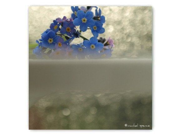 The framing and composition here are unique and work well to present a different way the image as a whole. > Forget-me-not (Machel Spence)