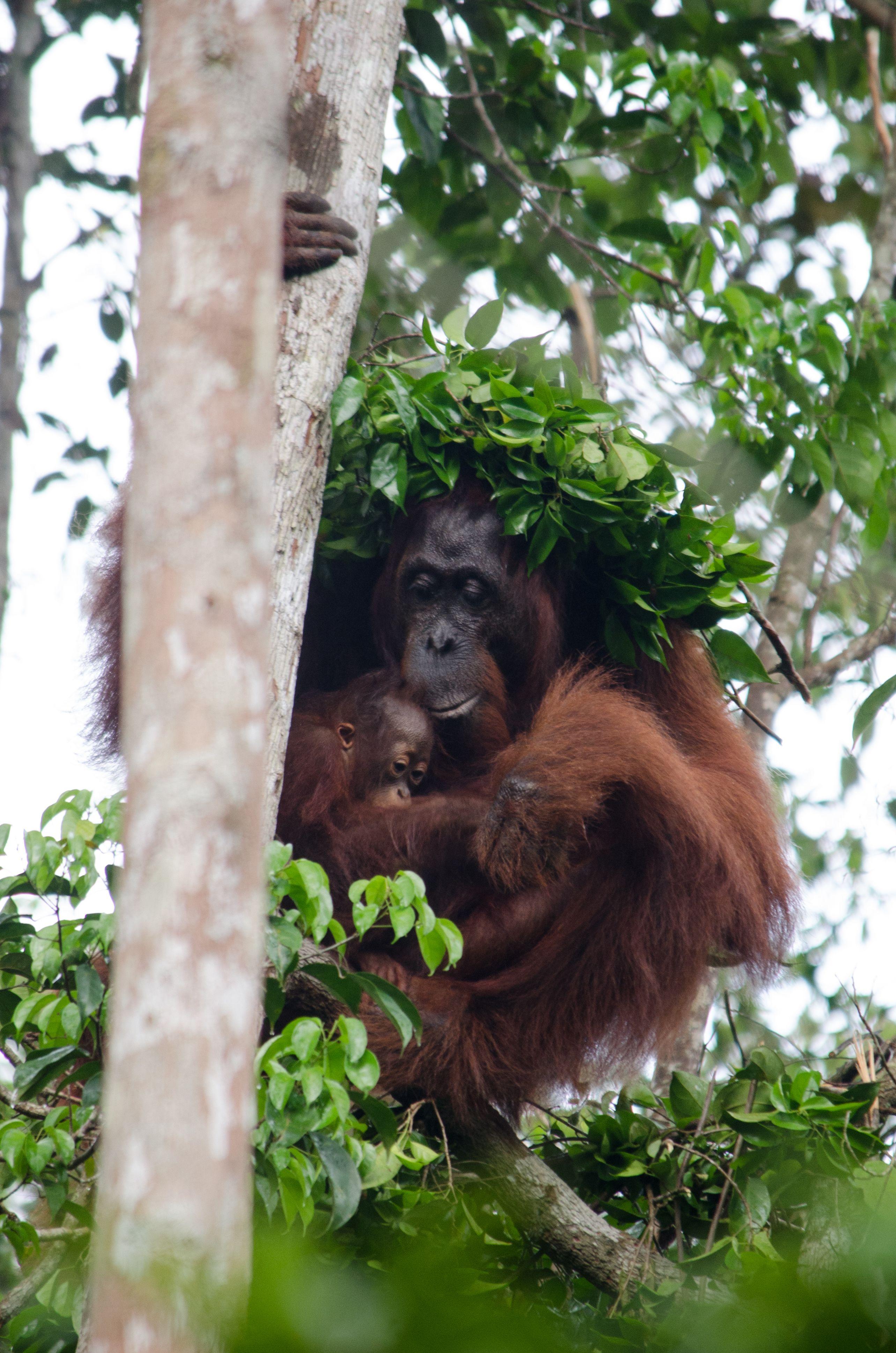 borneo rainforest animals list