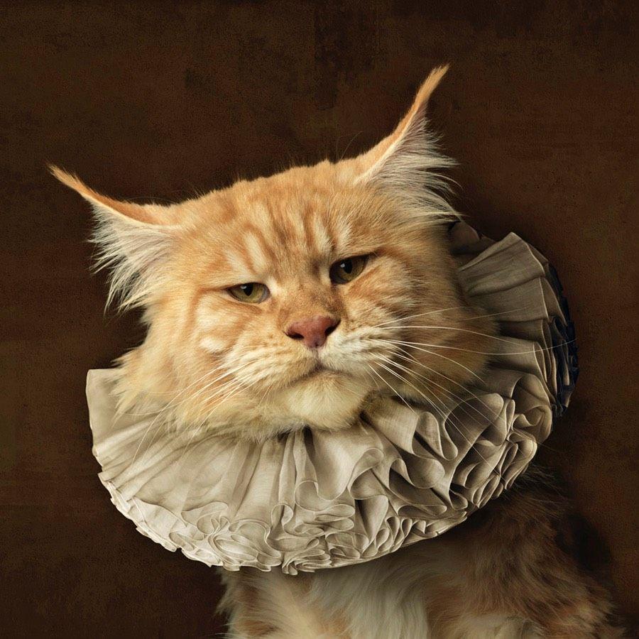 Cats Wearing White Collars (Ruffs)