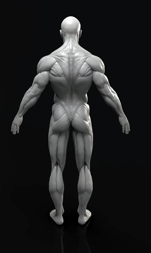 50+ Human model ideas