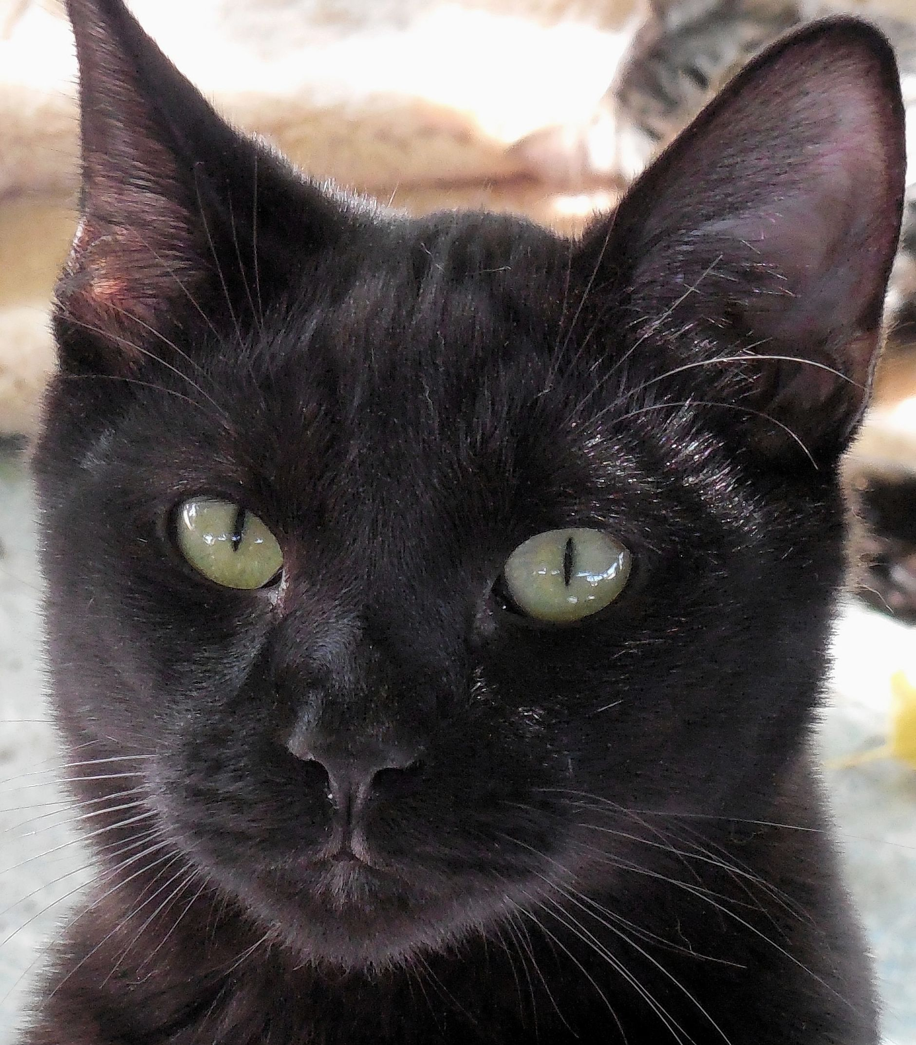 Maverick is a 10-month-old male who is friendly to humans and cats. He is very social. Maverick is neutered, vaccinated, suited for most families and his adoption fee is $60. Apply with Another Chance Animal Welfare League Adoption Center at www.acawl.org. Call 229-7833. Go to www.redding.com for more adoptable pets.