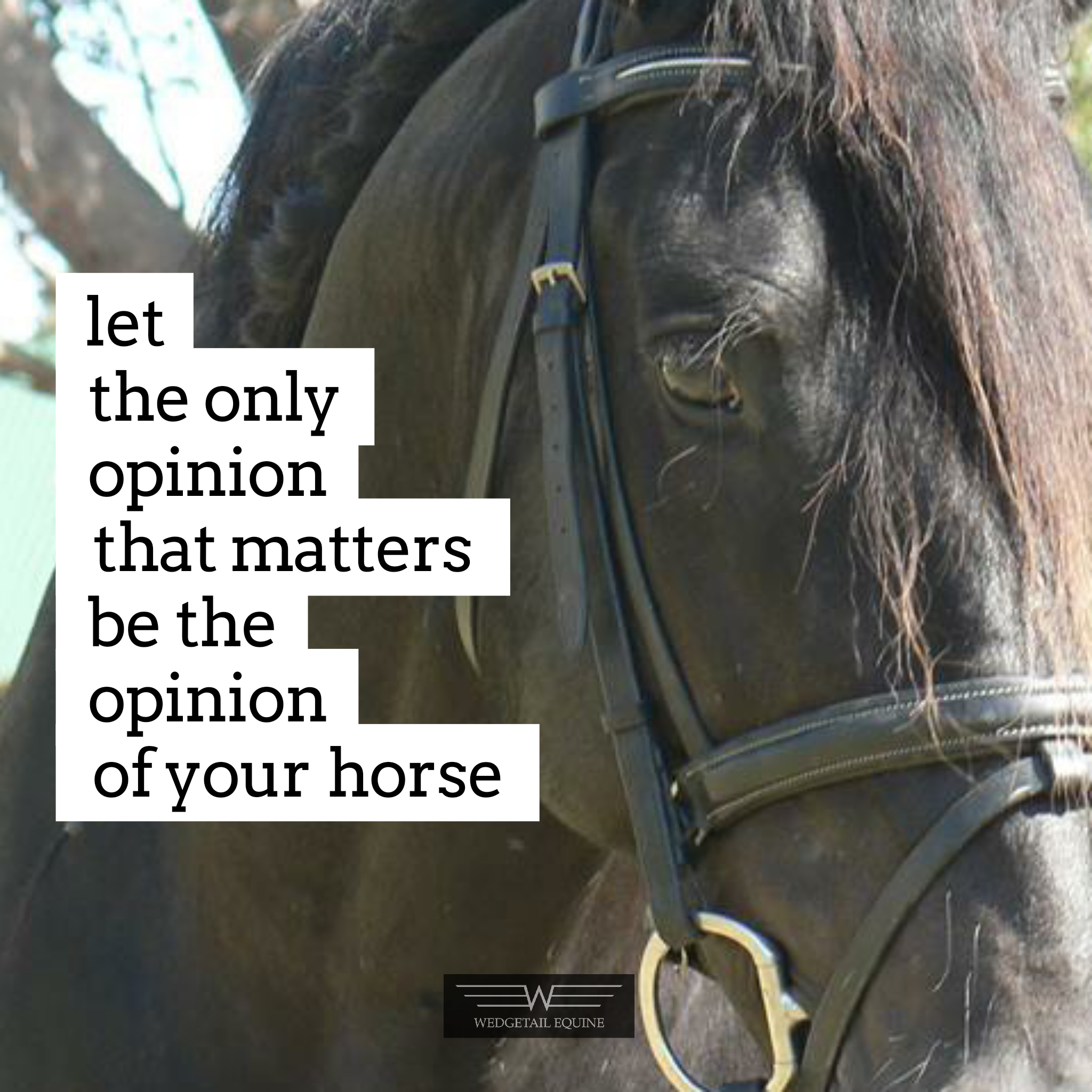 Let The Only Opinion Of Your Riding That Counts Be The Opinion Of Your Horse Let Your Horse Have The Loudest Voice In Your Horses Confidence Coaching Riding