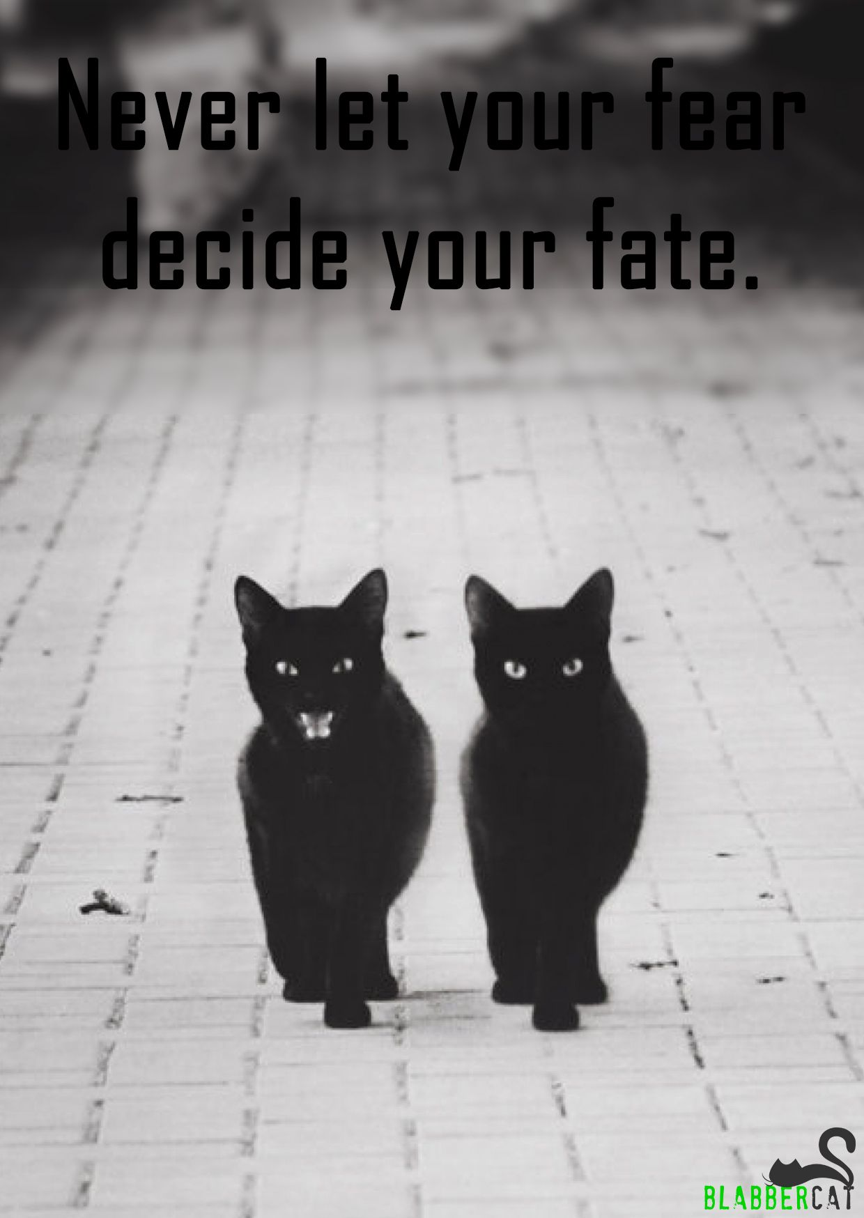 Fear Is Only As Deep As The Mind Allows Dont Fear Bigger Fate Deep Mind Brave Face Everything Crazy Cats Black Cat Cats