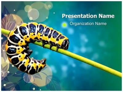 Butterfly Larvae Powerpoint Template is one of the best